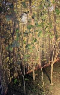 Diorama dun habitat